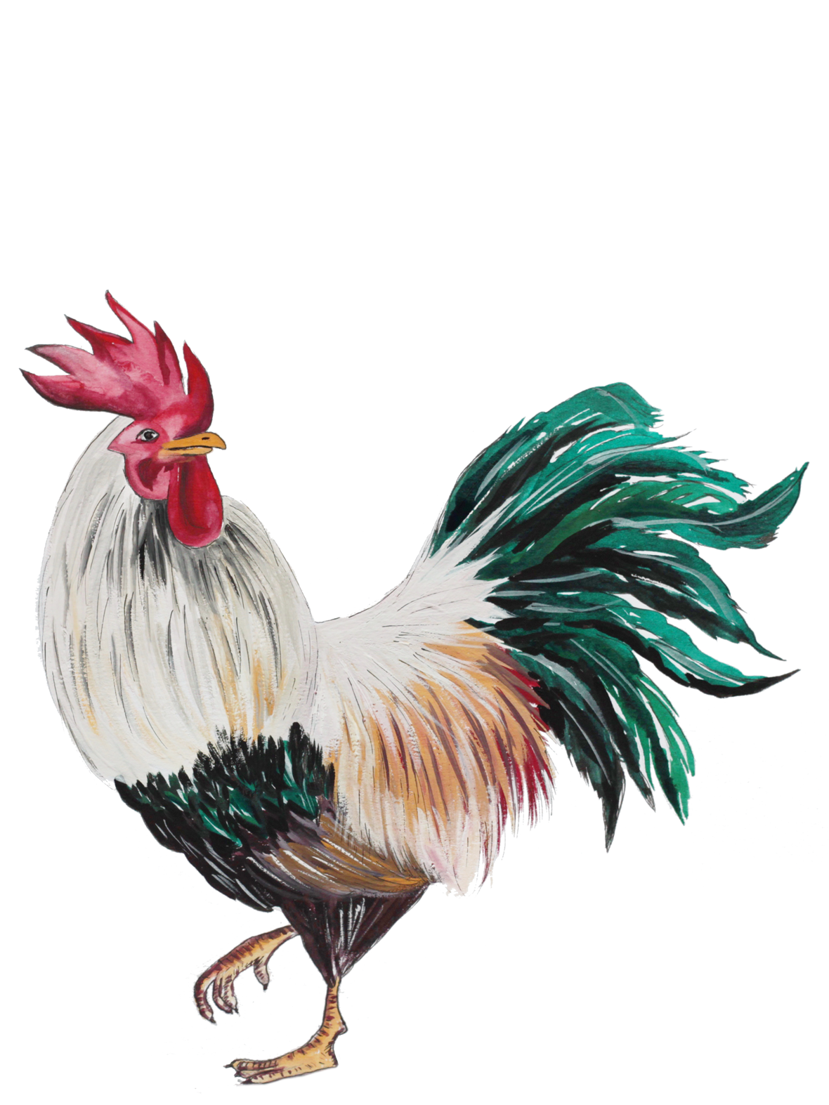 Hand drawn illustration of a Rooster